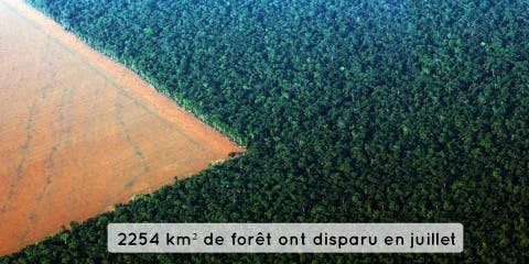En un an, la déforestation de la forêt amazon...