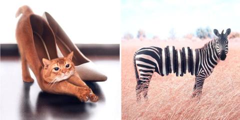 18 animaux étranges mixés à d'autres choses p...