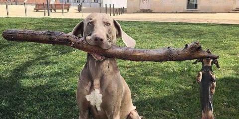 8 photos de chiens vraiment aussi drôles que...
