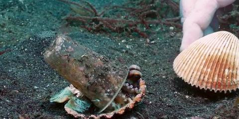 Un plongeur convainc un bébé pieuvre de quitt...