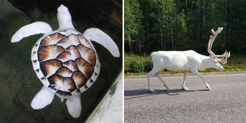 12 animaux uniques atteints d'albinisme