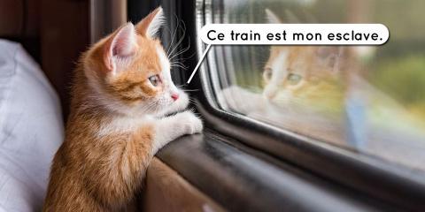 7 preuves qu'un chat est mille fois supérieur...