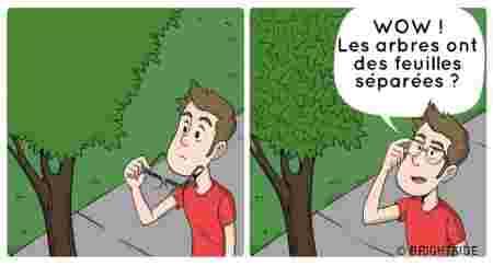arbre feuilles lunettes