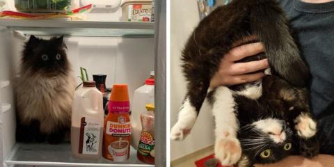 10 fois ou les chats nous ont prouvés qu'ils...