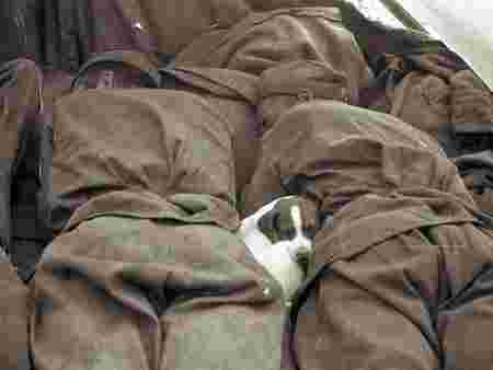 Photographies homme animaux attendrissant soldats chiot sieste