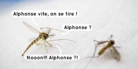 5 stratagèmes pour éloigner les vilains moust...