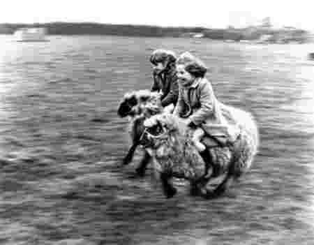 Filles moutons jeu