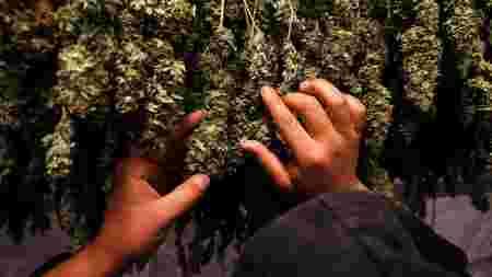 drogue, weed, cannabis, paraguay