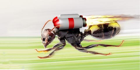 Il existe une fourmi qui peut courir 10 fois...