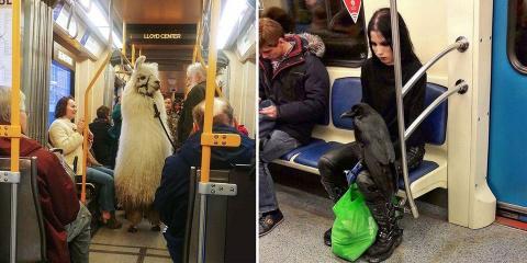 14 animaux qui voyagent comme des individus c...