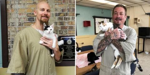 Une prison en Indiana recueille des chats et...