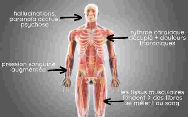 hallucination effet paranoia drogue flakka schema pausecafein corps humain