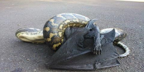 37 photos de créatures Australiennes qui vont...