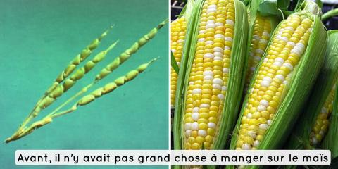 6 photos de fruits et légumes avant et après...