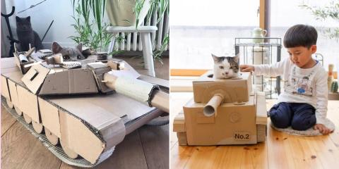 Avec le #CatTank, les chats partent en guerre...