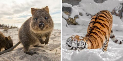 10 animaux plus photogéniques que des top mod...