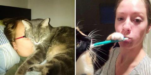 12 chats ne comprenant pas le concept d'espac...
