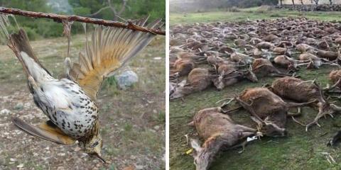 5 pratiques de chasse aberrantes qui devraien...