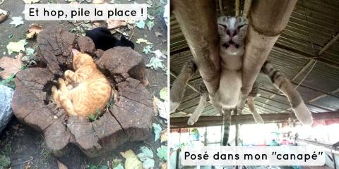 15 chats qui se sont endormis à des endroits...