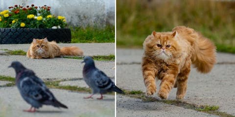 Voici comment un chat chasse les oiseaux en 1...