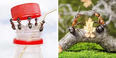 Cet homme met en scène les fourmis dans de su...
