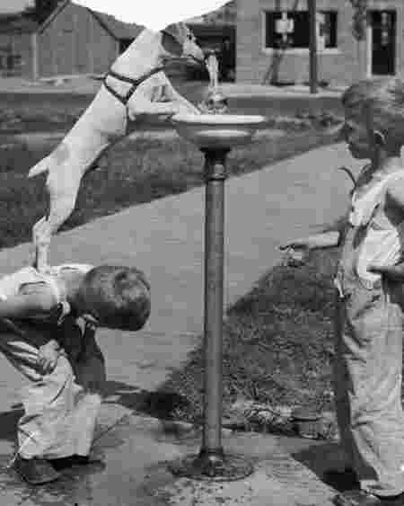 Garçon chien fontaine aide