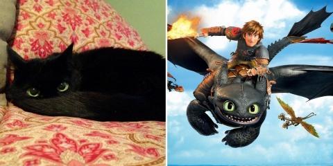 8 preuves que les chats noirs sont des furies...