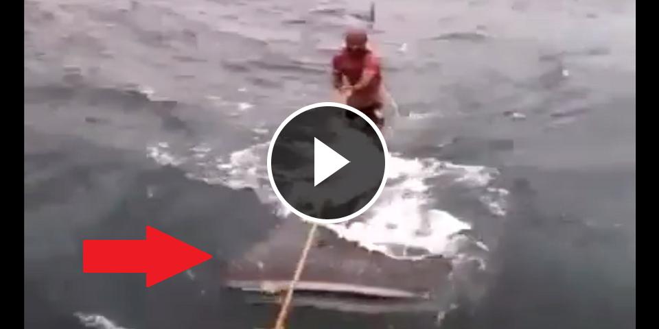 vid o quand 2 hommes prennent un requin baleine pour une planche de surf. Black Bedroom Furniture Sets. Home Design Ideas